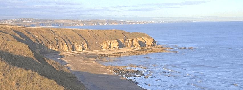 Avi-Coast